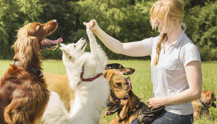 The-Benefits-of-Hiring-a-Pet-Sitter-for-Dogs