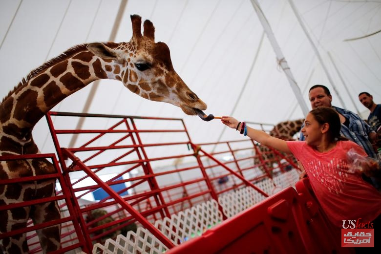 A girl gives food to a giraffe as people attend the New Jersey State Fair in Augusta, New Jersey