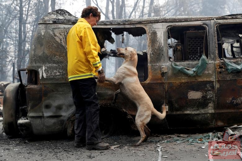 Atkinson searches for human remains with her cadaver dog in a van destroyed by the Camp Fire in Paradise