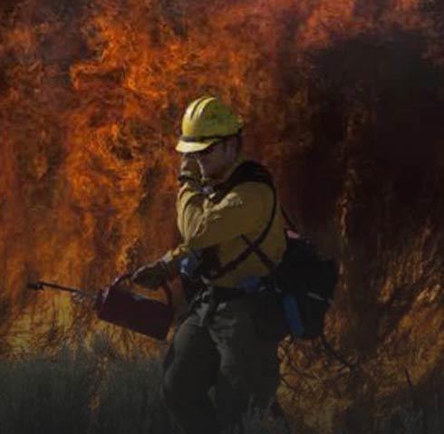 آتش-سوزی-در-کالیفرنیا