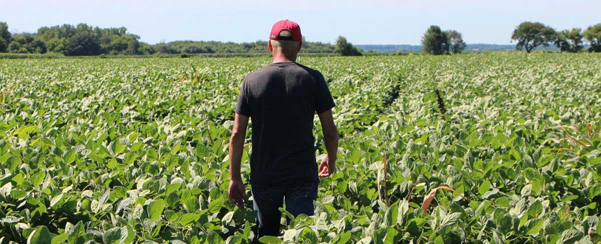 وضعیت-زندگی-کشاورزان-در-آمریکا-چگونه-است؟